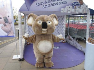 Koala - Cushelle