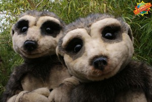 Meerkats - Chessington World of Adventures