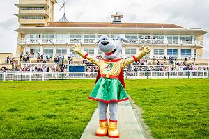 Gracie the Greyhound Towcester Racecourse